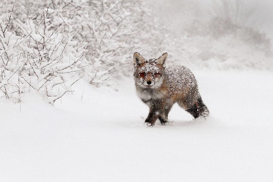 fox15