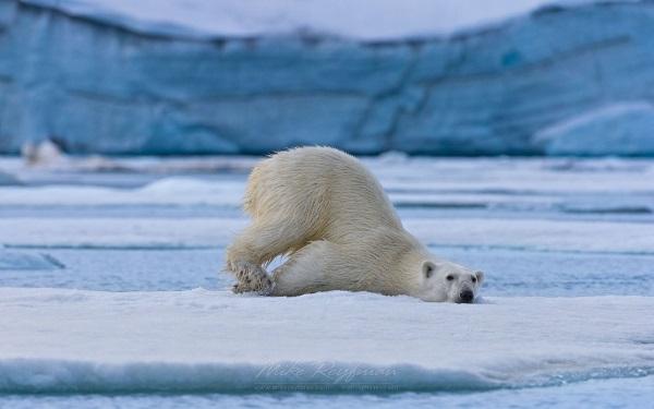 Побързайте да видите полярните ледове и странните местни животни, преди да са изчезнали.