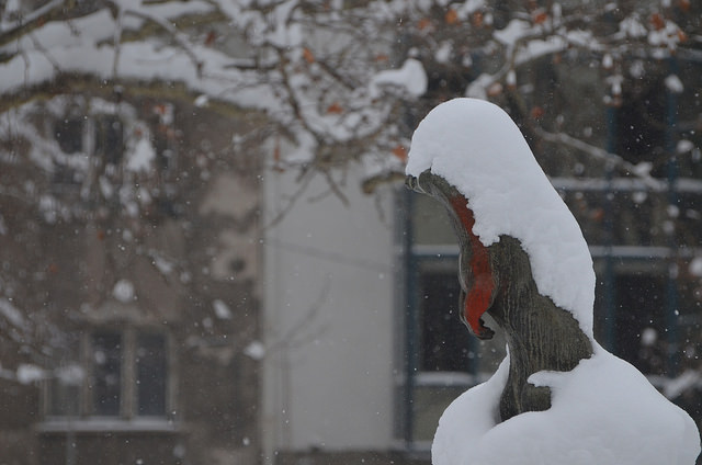 Снимка: Емил Георгиев - Снегът и малкият панелен човек