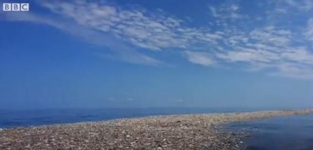 """""""Плавахме около 8 километра, заобиколени от боклуци"""", разказва фотографката Каролайн Пауър. Снимка: Стопкадър - Остров от боклуци изникна в Карибско море"""