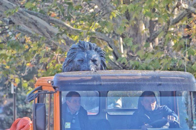 Лъвската статуя бе докарана пред НДК с камион. Снимки: Емил Георгиев, Веселин Боришев, Клуб Z - Лъвът се завърна (снимки)