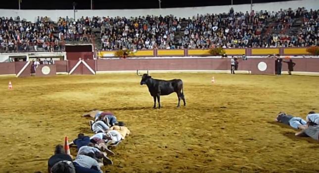 Бикът е объркан от липсата на битка на арената в южното френско градче Вийо-Буко-ле-бен. Снимка: Стопкадър - И бикът – цял, и зрителите – сити (видео)