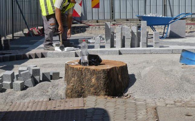 """Дано на мястото на премахнатите изсъхнали дървета бъдат засадени нови. Снимка: Емил Л. Георгиев/Площад Славейков - Площад """"Славейков"""" остана без половината си дървета"""
