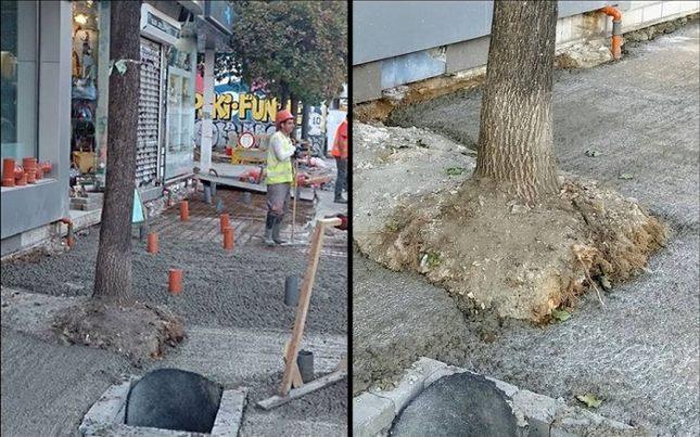 """Дърво на ул. """"Граф Игнатиев"""", което има опасност да изсъхне заради бетона, залят около ствола му. Снимки: """"Спаси София"""" - Дървета по """"Графа"""" задушени с бетон"""